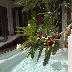 Grand Suite Plunge Pool
