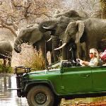 Safaris bring you close up to Africa's big game