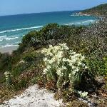 Yamba in spring