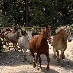 CCR Horses