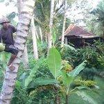 Villa Orchid Bali Resmi