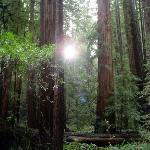 Redwood National Park Photo