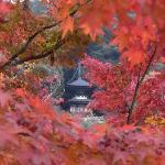 紅葉がとても美しかったです