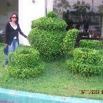 Amazing teapot hedge