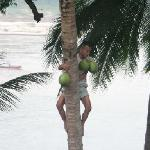 Coconut gatherer - just 5 metres from our room
