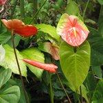 Hale Moana Hawaii Bed & Breakfast - Hawaii Paradise