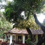 Pooppally's front garden and mango tree