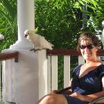 feeding cockatoos on deck