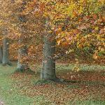 tree-lined walkways