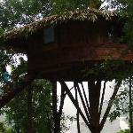 the brand new tree-house