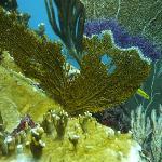 Nice colors underwater