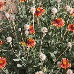 Wild desert flowers sporadically appear through out the property at La Luz Desert Retreat.  Esca