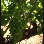 Napa Valley Winery Exchange Photo