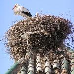 Stork nest as seen from roof terrace