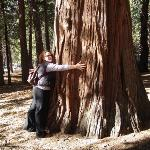 Me hugging a giant Redwood in the redwood national park in California