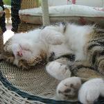 Rivieras cat relaxing