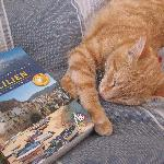 Our cat Leo is a real Siciliano!