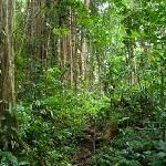 Walking through pristine rainforest to Kele river