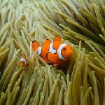 Nemo only a short distance from the beach