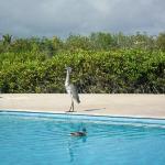 Finch Bay Galapagos Hotel Foto