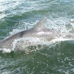 Captiva Dolphin Cruise..... So much fun