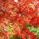 大山ケーブルカー付近の紅葉その1