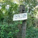 Pacbitun