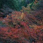 白倉峡の紅葉