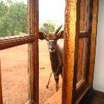 Nyala outside window
