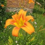 Beautiful orange flower at the Markham Museums.