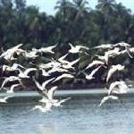 Carambolim Bird Sanctuary