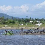 Aves diversas en la barra de Coyuca