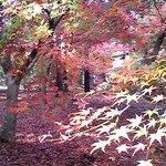 Foto di Omachi Park