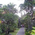 Beautiful Tree lined pathway