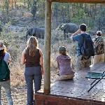 Shindzela Tented Safari Camp, Timbavati Reserve Elephants from Tent 6