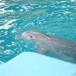 Los delfines si están!!!