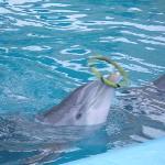 El juego de los delfines
