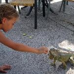HOW ABOUT PLAYING WITH THE IGUANAS