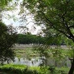 Foto de Reserva Ecologica