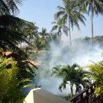 the fumigation was like napalm