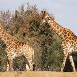 You can't miss the giraffe!