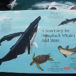海の生物の看板