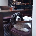 The pub dog!