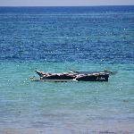 Asha boat