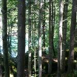 darüberliegender Wald