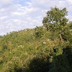 View of surrounding forest