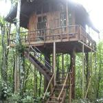 Treehouse #2 looks nicer fromthe outside than #3