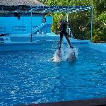 Dolphin Trainer Riding on the Dolphins