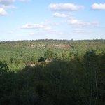 Fontainebleau Forest (Foret de Fontainebleau)