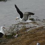 birds at nearby beach